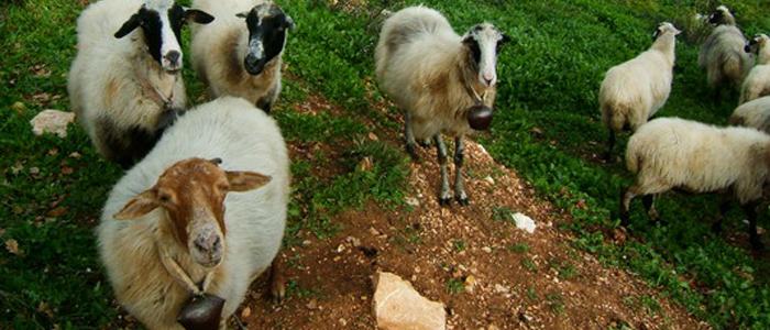 Corfu Veterinary Clinic
